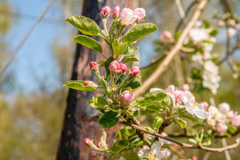 persijnpad-13-29