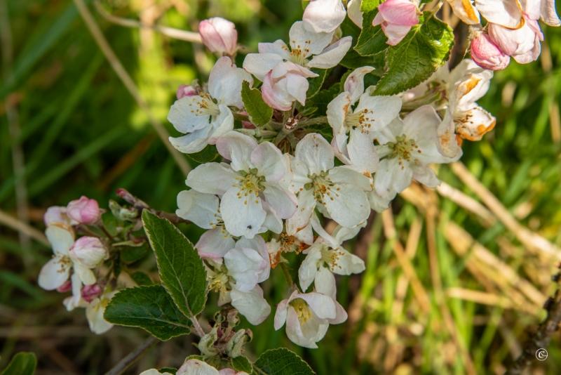 persijnpad-15-31