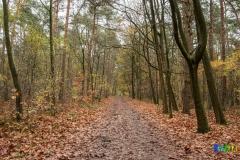 gemeente-molen-bos-1