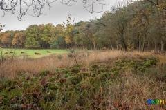 gemeente-molen-bos-15