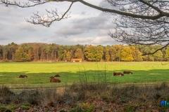 gemeente-molen-bos-16