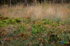 gemeente-molen-bos-18