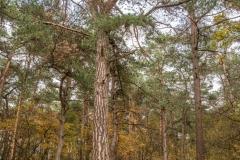 gemeente-molen-bos-5