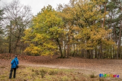 gemeente-molen-bos-6
