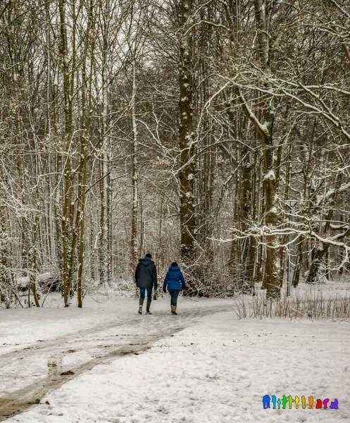 winterbeelden-63